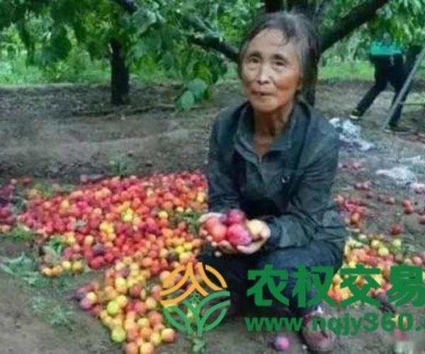 中国农业怎么这样触目惊心?