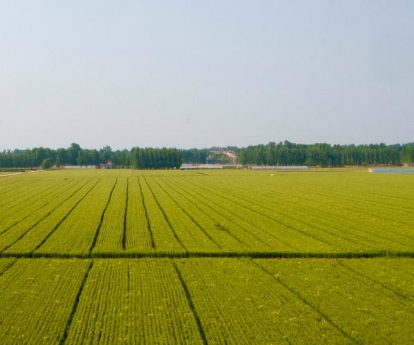 聚焦三农新政策