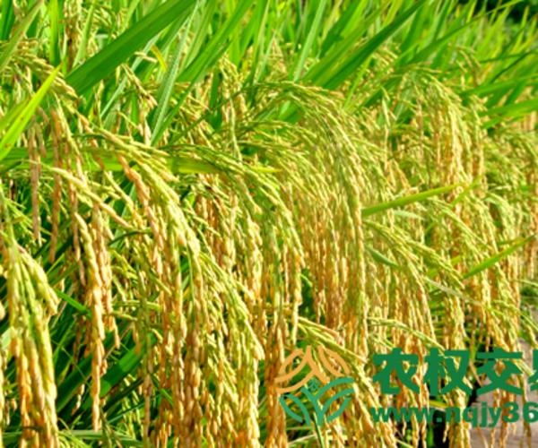 走进政策:解决三农问题的根本途径是什么?