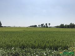 湖北省荆州市(或天门)1200亩水产养殖用地出租