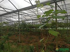 全国300亩生产类生态农场转让