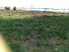 甘肃省酒泉市肃州区16.3亩水浇地出租