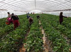 江苏省无锡市江阴市霞客镇458亩水果种植用地生态园转让