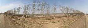 天津宁河丰台1255亩蔬菜大棚及设施转让