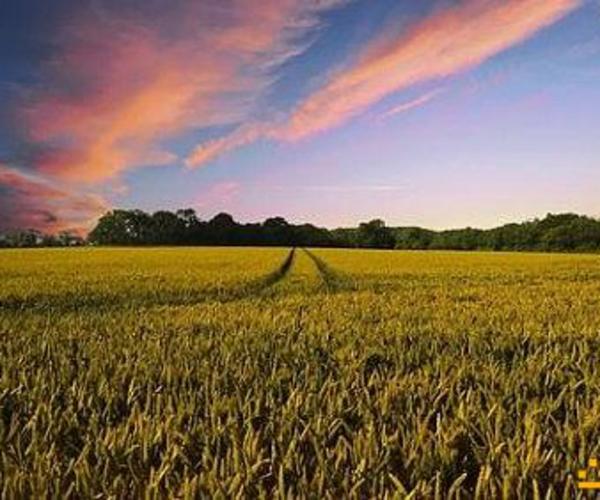 金种子通证ZZT——区块链+大数据打造精准农业